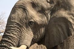 Elephants, Elephant, Namibia, Elephant Images, Photos of Elephants, African Elephants, Ongava Camp