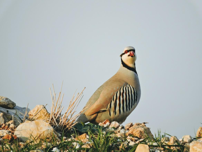 Birds, Birding, Israel