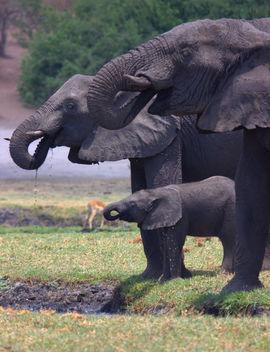 Grid elephant  2