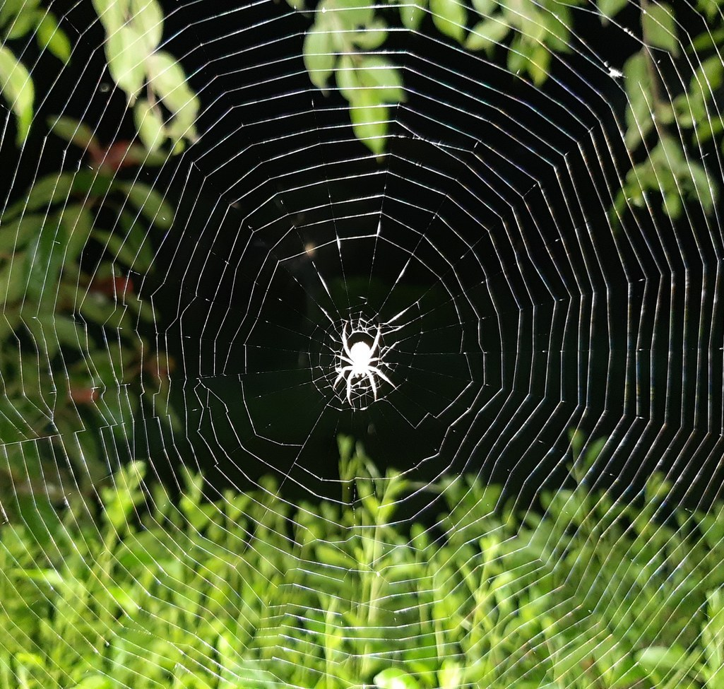 Spider,Spiders, India, Images of Spiders, Spider Photos