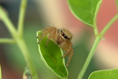 Spider, Spiders, India, Spider Photos, Images of Spiders