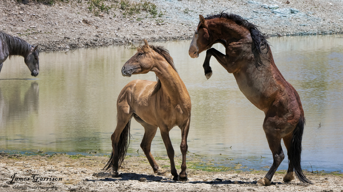 Horses, Horse, Mustangs, Colorado, Images of Wild Horses, Wild Mustang Photos,