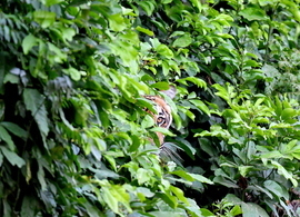 tiger photos, bengal tiger photos, tiger, bengal tiger, Deep Rajwar, india wildlife, india wildlife photos
