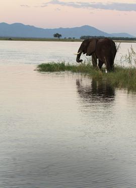 Grid zimbabwe elephant eric rock 9755