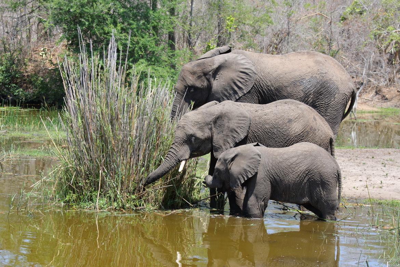 elephant, african elephant, elephant photos, african elephant photos, South Africa wildlife, South Africa wildlife photos, africa wildlife photos, africa wildlife, african safari photos, Kruger wildlife, Kruger wildlife photos, Kruger National Park