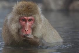 Grid 195ob monkey