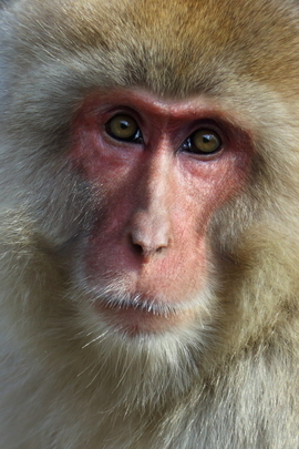 Grid 217ob monkey