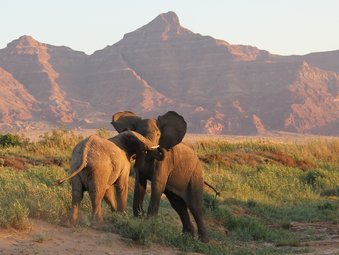 elephants, namibia, elephants fighting, African safaris, Namibia photography