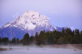 Elk, Jackson Hole, Jackson Hole wildlife, Jackson Hole wildlife photos, elk photos, elk images, elk pictures, Wyoming wildlife, Wyoming wildlife photos, elk in Wyoming