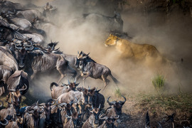 Grid kim griffin beauty and the wildebeest