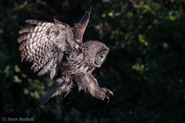 Grid ggow in flight