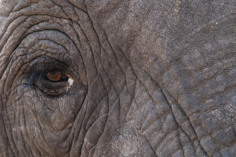 elephant, african elephant, elephant photos, african elephant photos, Zimbabwe wildlife, Zimbabwe wildlife photos, africa wildlife photos, africa wildlife, african safari photos, Hwange National Park, Camp Little Makalolo