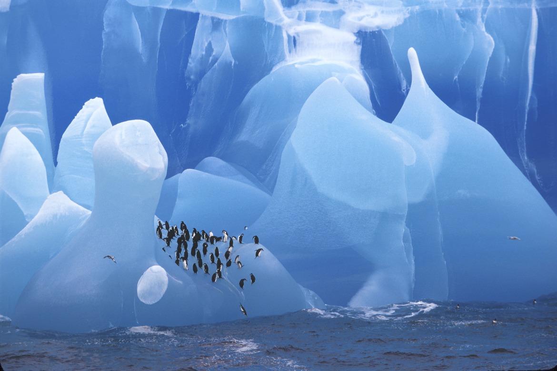 Penguin, Antarctica, iceberg, glacier, penguin images, penguin photography, glacier images, glacier photography, Antarctica photography, Antarctica images