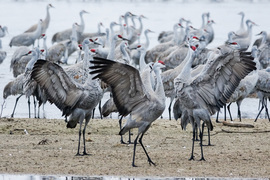 Grid cranes on platte