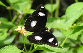 Grid butterfly