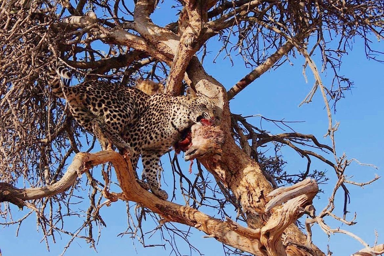 leopard, leopard photos, Botswana wildlife, Botswana big cats, leopards in Botswana, Madikwe wildlife