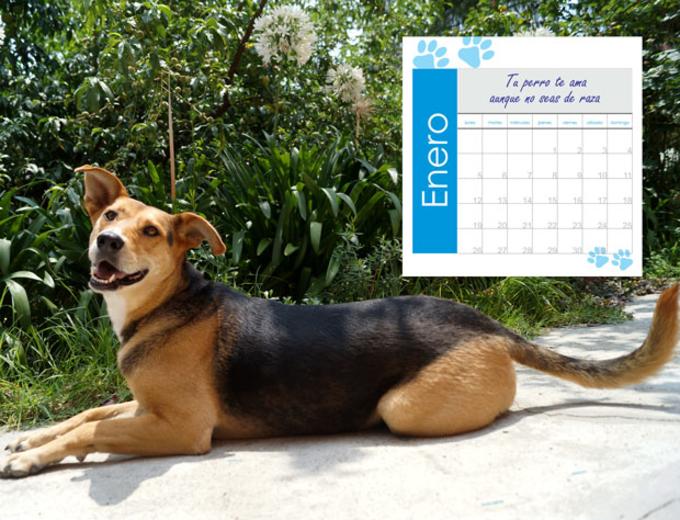 Fondeadora | Calendario Perritos Criollos