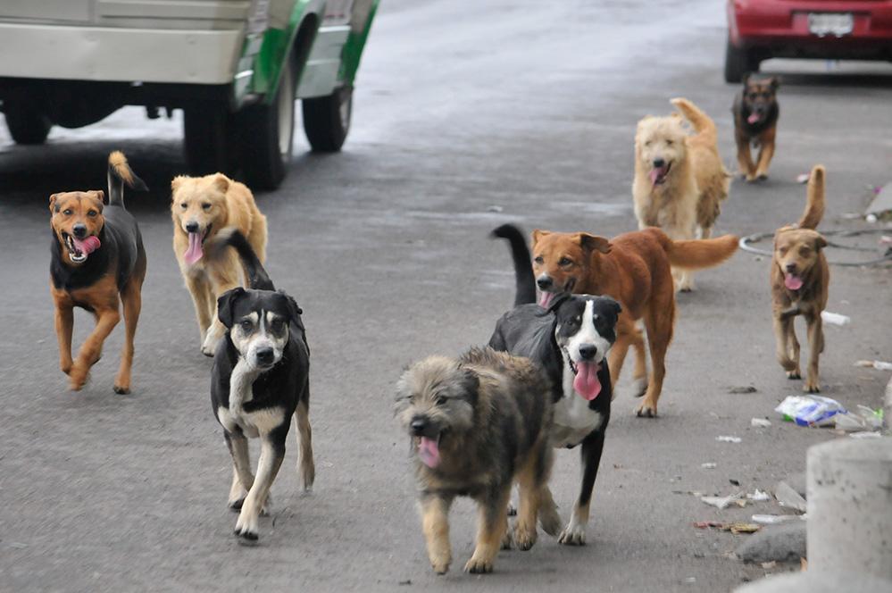 Resultado de imagen para calle gatos y perro