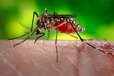 FDA Approves Test to Detect Zika Virus in Blood Donations