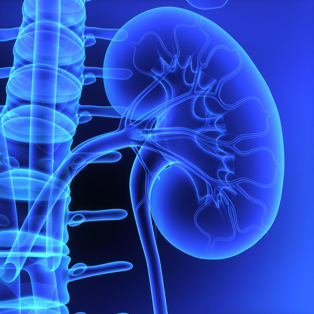 Phase 2 Results Show Increased Kidney Function in Alport Patients