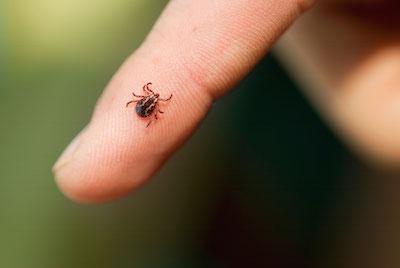 FDA Grants Fast Track Designation to Chikungunya Vaccine