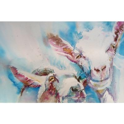 Goat4web