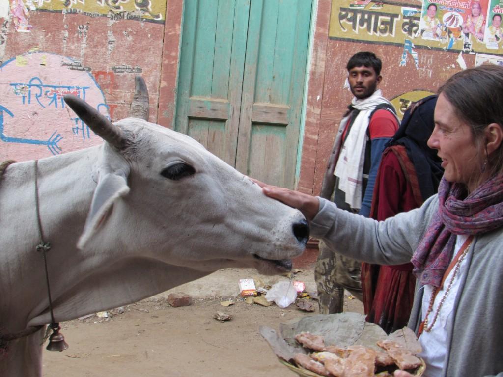 Janaki Christmas cow prasad