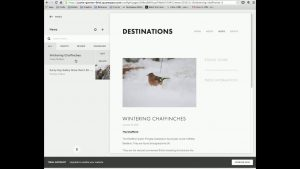 Adding a blog post to website using the Squarespace website builder. Credit: JIG Creative