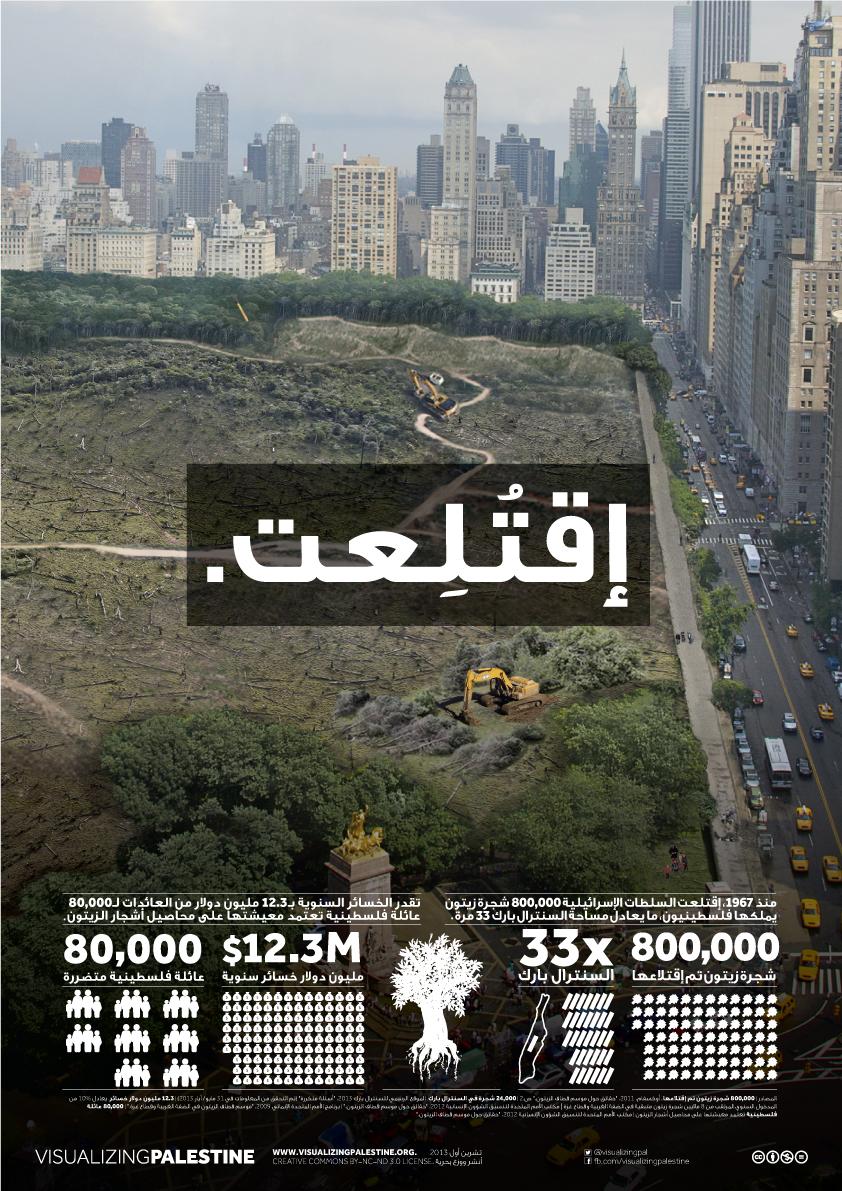 800,000 شجرة زيتون تم إقتلاعها x  33  السنترال بارك