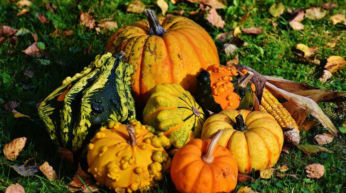 Fall pumpkins, squash and gourds. Image by Alexas Fotos, Pixabay.com.