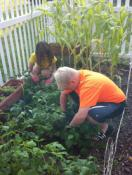 Children in the congregation of Centerville United Methodist Church grow food for the Food4Summer program. Photo by Brenda Donnelly. Story from Dayton Daily News.