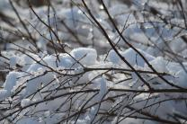 Image of snow on tree branch.  Photo by Kay Panovec, United Methodist Communications.