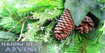 Season of Advent Pinecones - stock