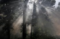 Rays of sunlight are filtered through tree branches creating sunbeams. A UMCom photo by Ronny Perry.