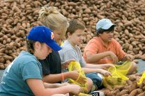 United Methodist youth bag sweet potatoes during a service project at Youth 2007 in Greensboro, N.C. From left are: Alexis Ward, Allison Kraft, Zach Wood and Connor Lewis of Messiah United Methodist Church in Springfield, Va. The hunger ministry, Society of St. Andrew, received 40,000 pounds of sweet potatoes that were packaged by volunteers and donated to area food banks. A UMNS photo by Mike DuBose. Photo number 07XXXX. Accompanies UMNS story #005. 1/17/11.; A UMNS photo by Mike DuBose