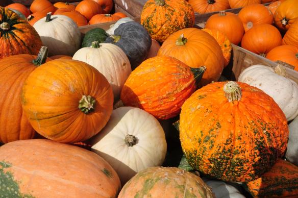 Photo showcases pumpkins and gourds. Photo by Roland zh / WikiMedia Commons.