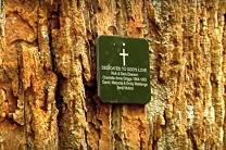 A memorial plaque marks a green burial site at Eco Eternity, a memorial forest at United Methodist Camp Highroad.
