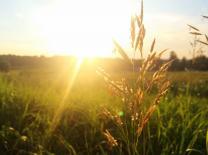 Summer sun shines through grass. Photo by Mario Trunz, Unsplash.com.