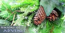 Season of Advent Pinecones - stock