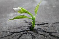 New life sprouting from a crack in asphalt. Photo by Skeeze, Pixabay.com.