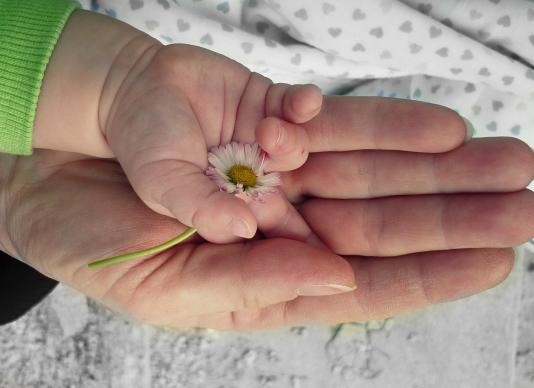 An outstretched child's hand holding a flower on top of a mother's hand. Image by Blanka Šejdová, Pixabay.com.