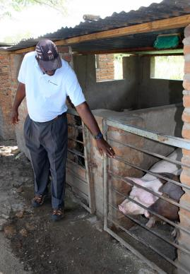 The Rev. Forbes Matonga, pastor-in-charge at the Nyadire United Methodist Mission, shows off the piggery that provides food and income for Home of Hope orphanage.