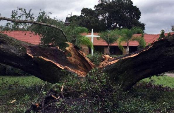 A large oak tree in front of First United Methodist Church, Winter Garden, Fla., missed most of the church after Hurricane Matthew clipped Florida. The tree did not hit the large stained glass window or the cross.