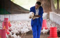 Agatha Muagura speaks softly to the chicken she has selected to slaughter as part of a training exercise at the Africa University farm in Mutare, Zimbabwe. Muagura, a freshman agriculture student from Mozambique, wants to be a farmer.