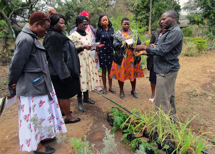 Boniface Matimba (right), program facilitator, holds a plant during organic farming training sponsored by United Methodist Women of Zimbabwe at Fambidzanai Permaculture Training Center in Harare. Photo by Kudzai Chingwe, UMNS.