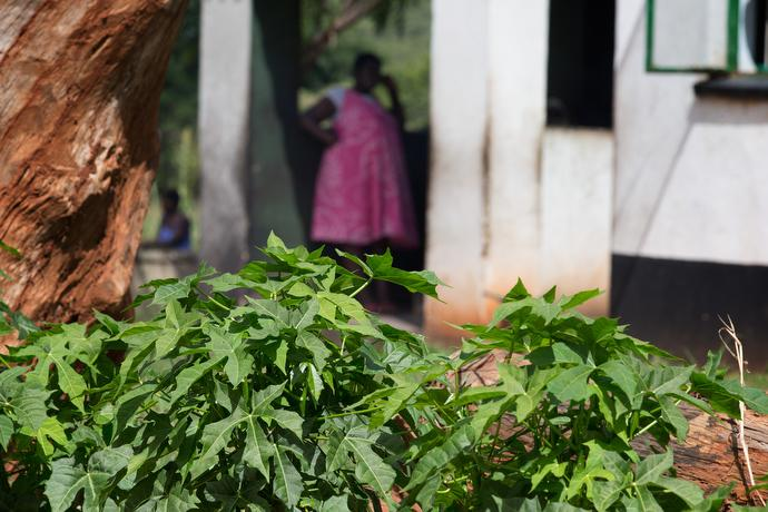 Chaya plants grow outside the waiting mother's shelter at The United Methodist Church's Old Mutare Mission in Mutare, Zimbabwe. The iron in chaya helps replenish that lost in childbirth. Photo by Mike DuBose, UMNS.