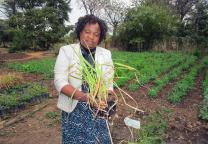 Grace Musuka, a United Methodist regional missionary in Zimbabwe, holds a lemongrass plant during a five-day organic farming training at Fambidzanai Permaculture Training Center in Harare. The objective of the workshop, hosted by the United Methodist Women of Zimbabwe, is to increase the use of chemical-free farming techniques in crop and animal production. Photo by Kudzai Chingwe, UMNS.