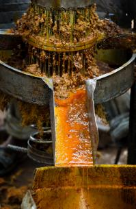 Palm oil runs from the hand-driven press at the United Methodist Ganta Mission Station in Ganta, Liberia. Photo by Mike DuBose, UMNS.