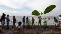A newly planted mangrove sapling stands tall during the opening devotion of a tree-planting ceremony along the shore of Minanga River in the Philippines. Members of Greenhills United Methodist Church and Central United Methodist Church helped plant 320 mangrove trees to counteract climate change. Photo courtesy of Jastine G. Narvaez.