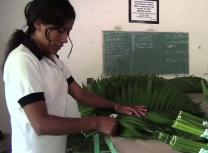 Farmers in Guatemala and Mexico derive income from the sale of palm leaves for Palm Sunday.